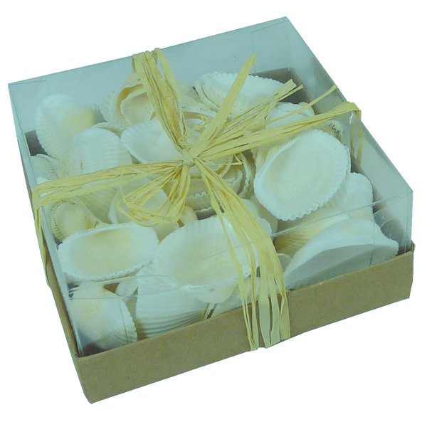 Scallop shells 130G pack in Clear PVC Lid Box 9cm